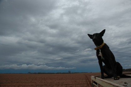 Dog on the ute - Photography by John Ferrier